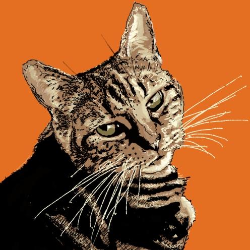 kit-catfinal
